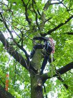 Baumschnitt im Herbst