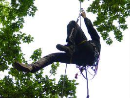 Aufstieg am Seil zur Baumpflege und Kronenrückschnitt