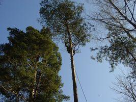 Komplizierte Baumfällung